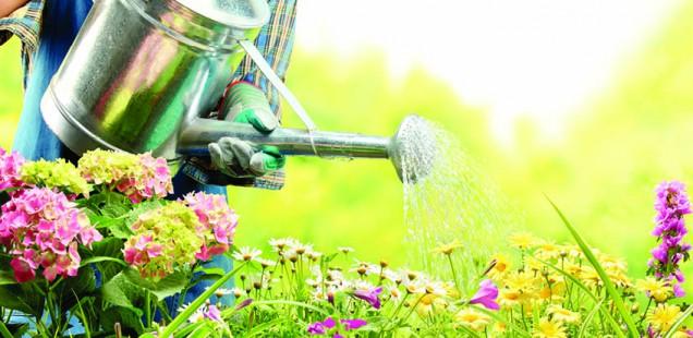 How Does Your Garden Grow? Unexpected Health Benefits of Gardening